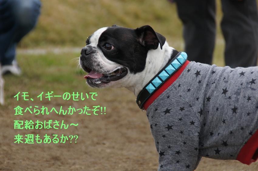 17_20111212195739.jpg