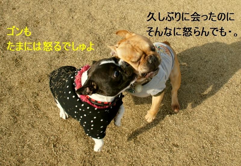 17_20111221131424.jpg