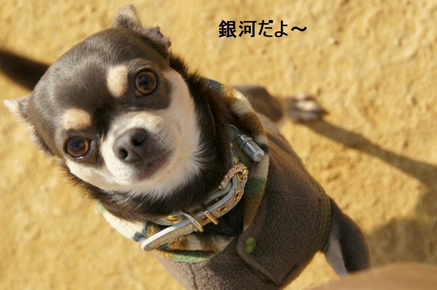 18_20111221131910.jpg