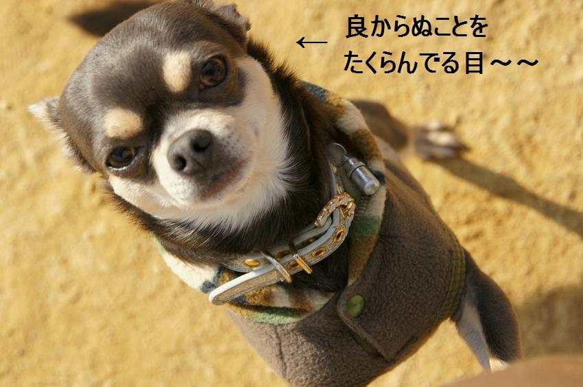 19_20111221131910.jpg