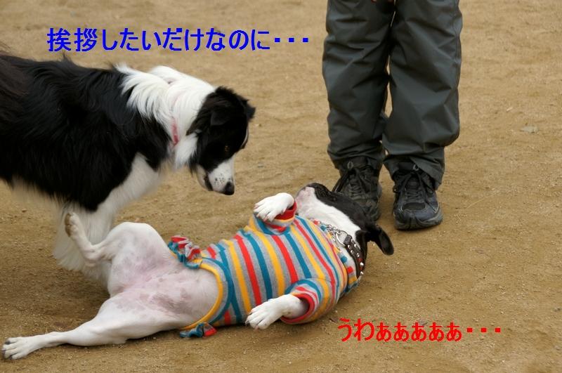 1_20120105160521.jpg
