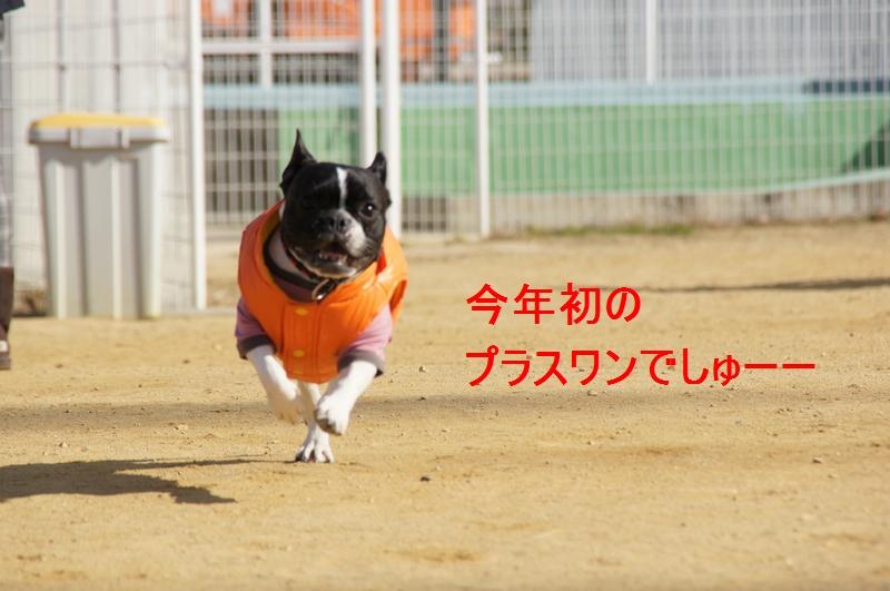 1_20120110081306.jpg