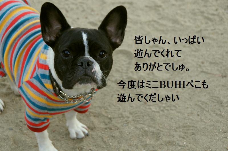 29_20120105163349.jpg