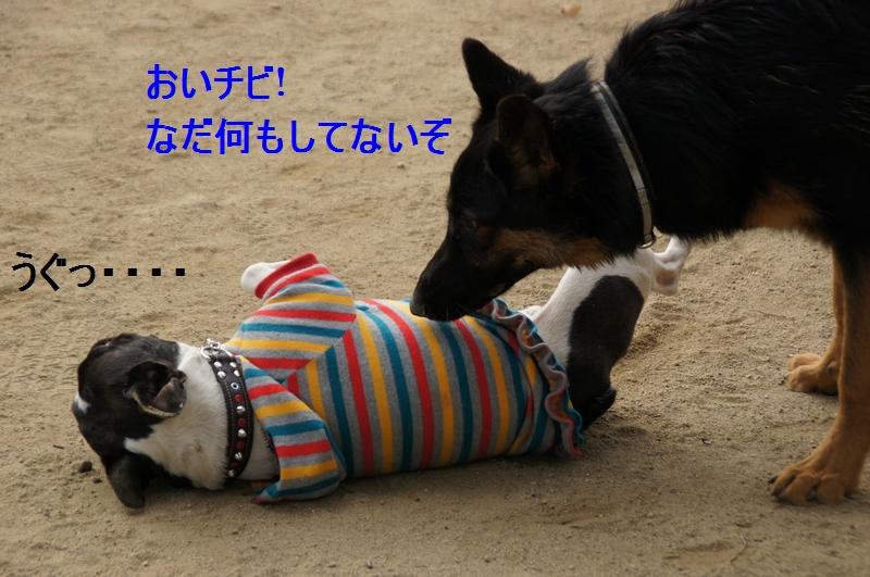 2_20120105160521.jpg