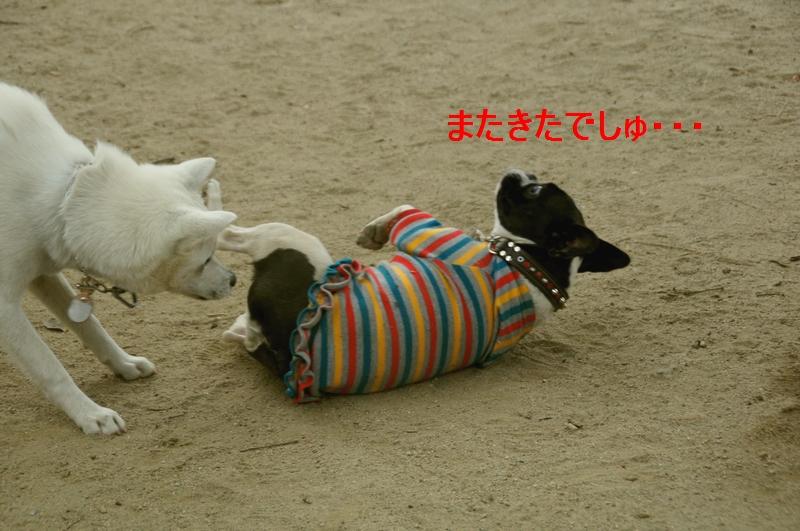 3_20120105160520.jpg