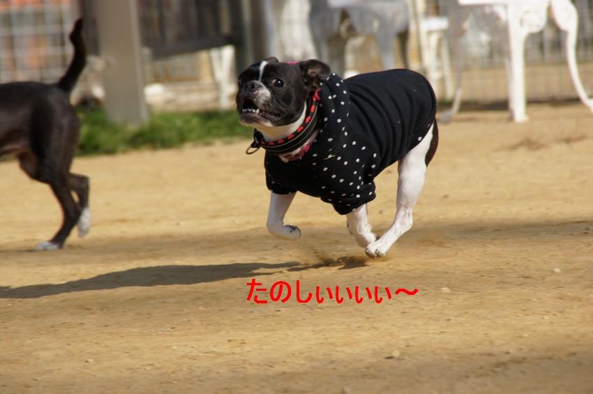 4_20111221130237.jpg