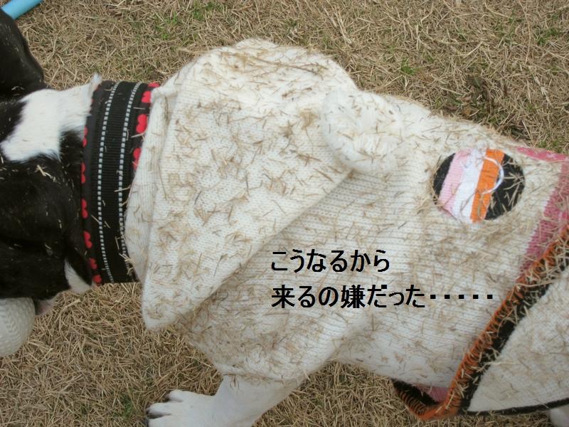 4_20120112105129.jpg