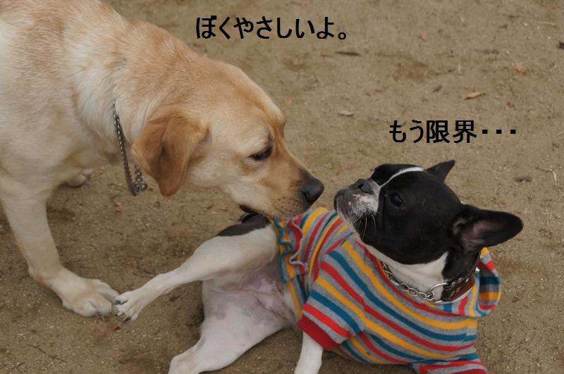 5_20120105160519.jpg