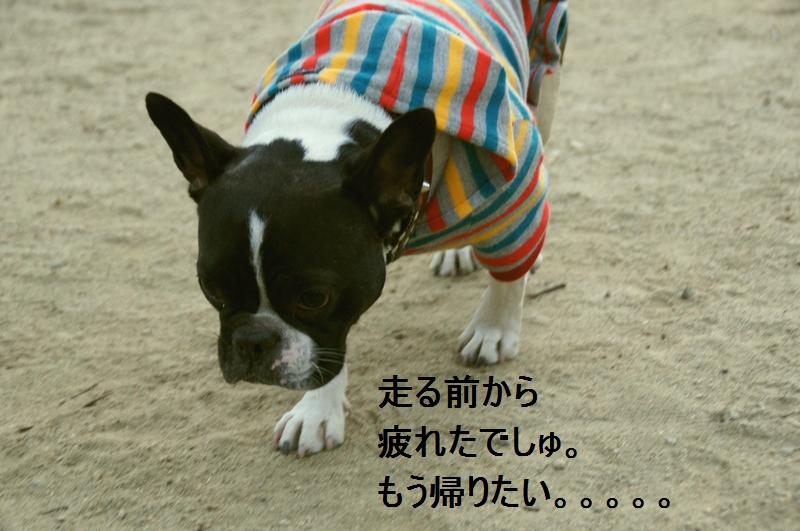 7_20120105160555.jpg
