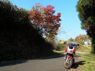 RIMG9700.jpg