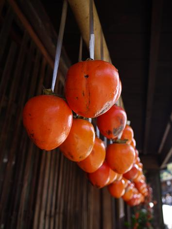 吊るし柿11.3