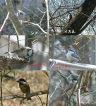 山の小鳥達