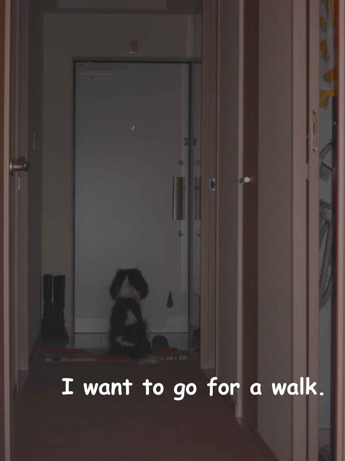 散歩に行きたいデス3