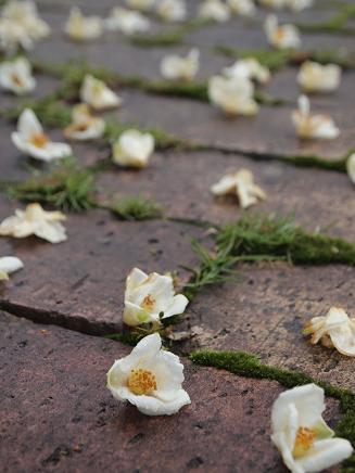 ヒメシャラの花 2