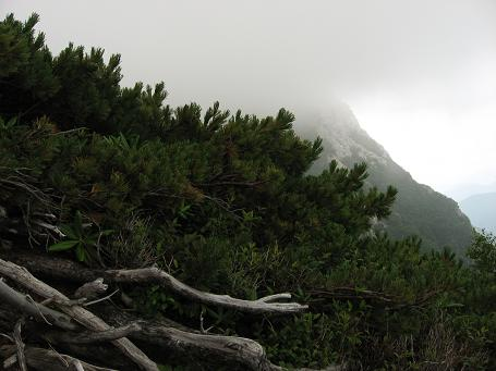 仙水峠に向けて下山