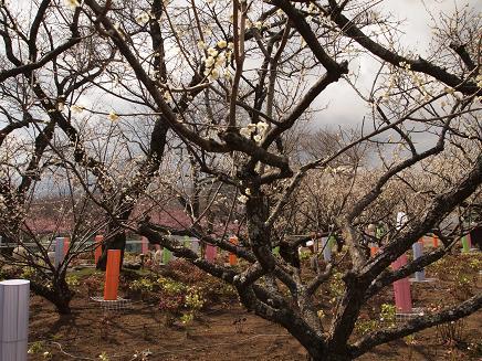 やっと咲いた梅