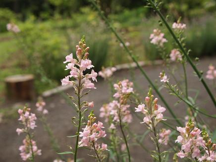 夏の小さな花たち