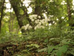 登山道で見た草花