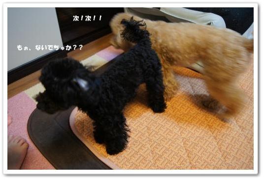 20110619yuzukosyo8k.jpg