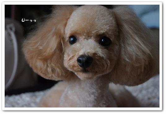 201108024yuzu2.jpg