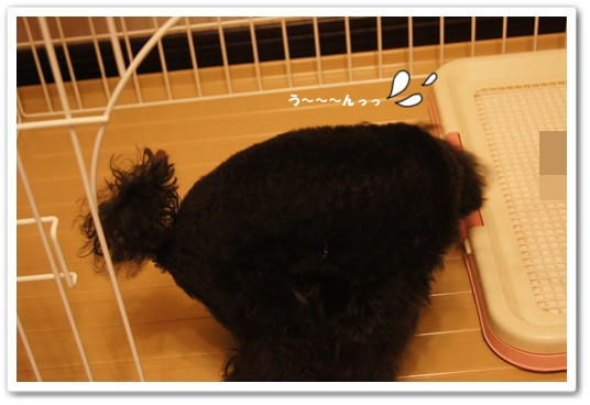 201108025kosyo3.jpg