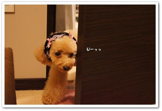201108025yuzu2.jpg