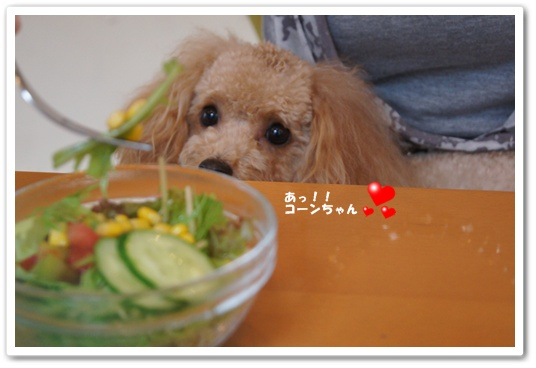 201108031yuzu2.jpg