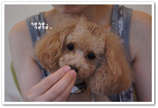 201108031yuzu3.jpg