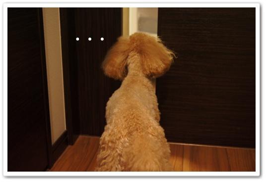 20110809yuzu1.jpg