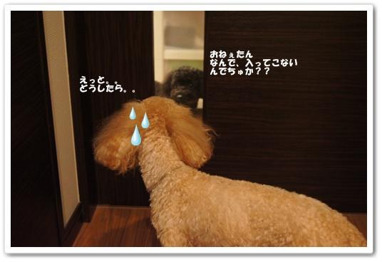 20110809yuzu3.jpg