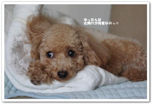 20110809yuzu5.jpg