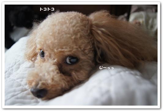 20110814yuzukosyo1.jpg
