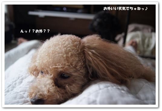 20110814yuzukosyo6.jpg