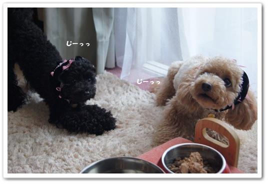 20110816yuzukosyo1.jpg