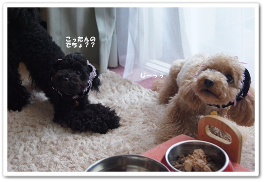 20110816yuzukosyo2.jpg