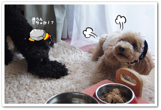 20110816yuzukosyo3.jpg