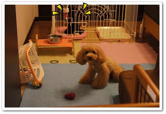 20110816yuzukosyo4.jpg