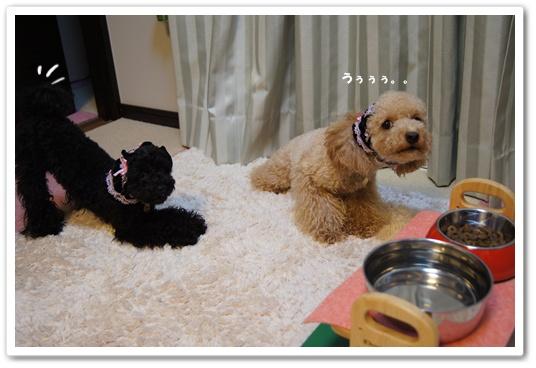 20110816yuzukosyo5.jpg