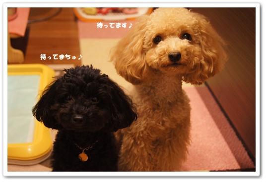 20110816yuzukosyo6.jpg