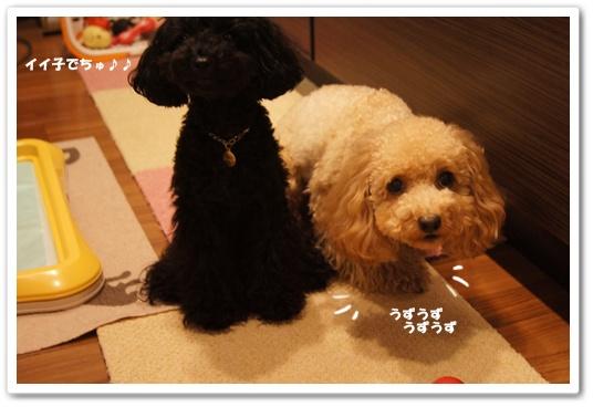 20110816yuzukosyo7.jpg
