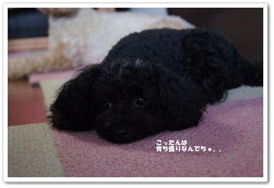 20110816yuzukosyo8.jpg