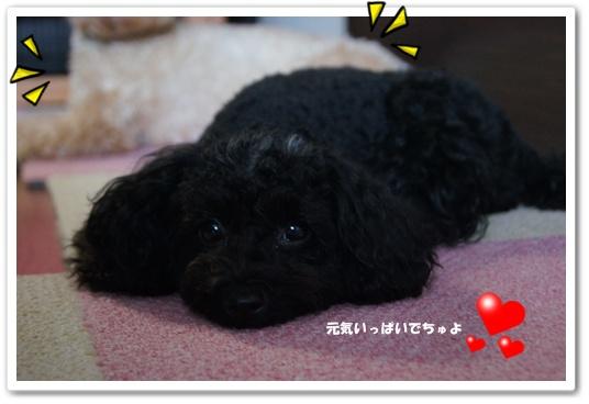 20110816yuzukosyo9.jpg