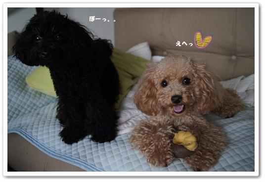 20110821yuzukosyo1.jpg
