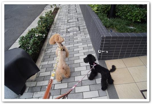 20110827yuzukosyo1.jpg