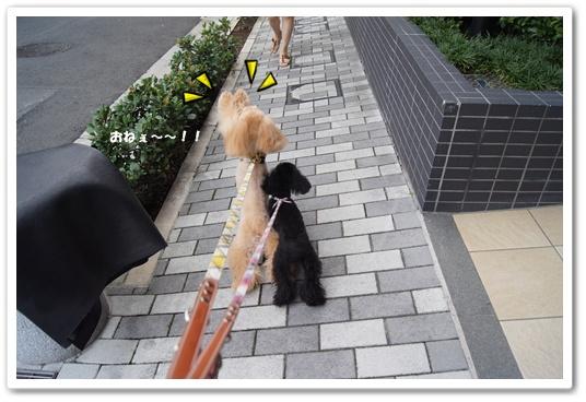 20110827yuzukosyo3.jpg