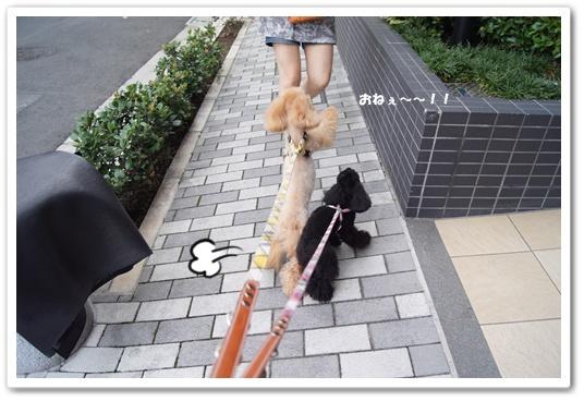 20110827yuzukosyo4.jpg