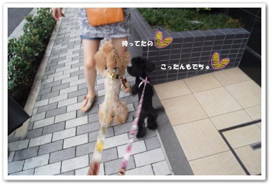 20110827yuzukosyo5.jpg
