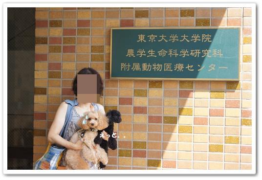 20110827yuzukosyo6.jpg