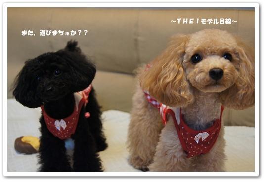 20110902yuzukosyo5.jpg