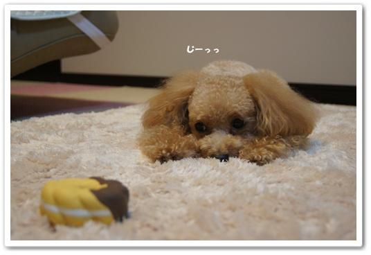 20110904yuzu5.jpg